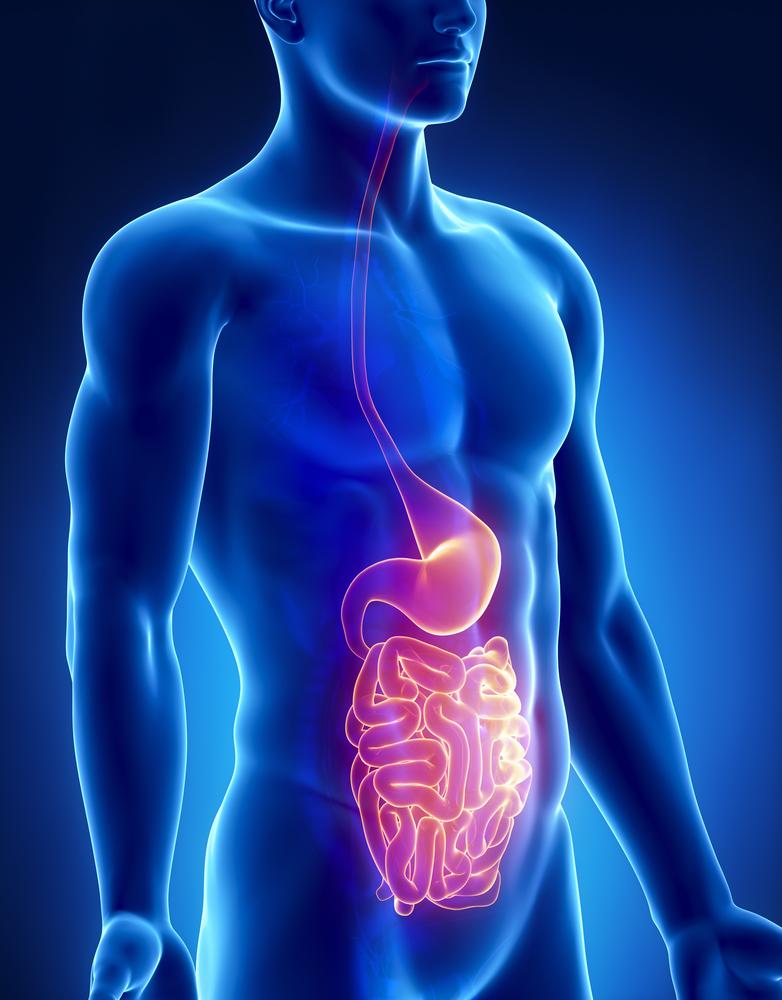 Digestion Aid